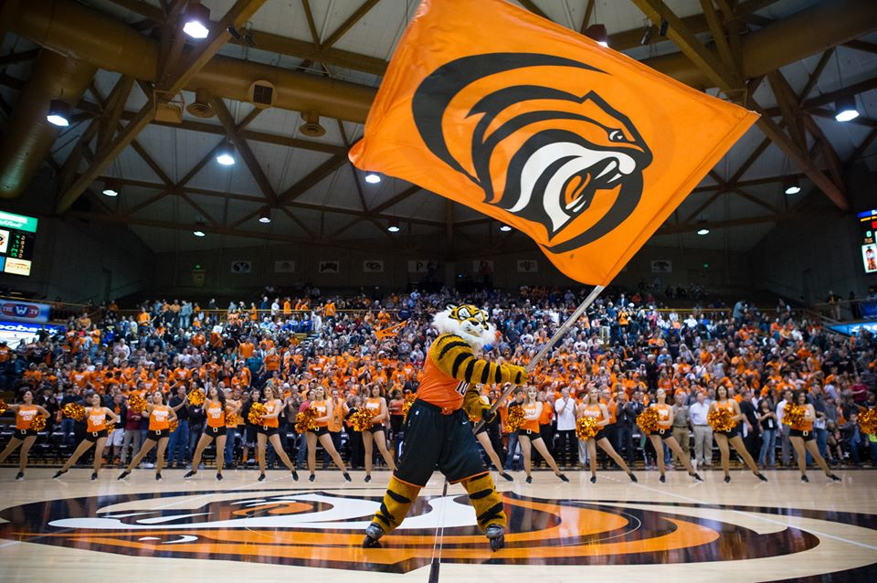 Pacific Tigers Mascotte Basketball